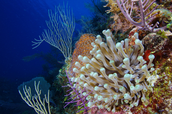 destruction of coral reefs essay Coral reefs are found in warm, shallow waters of the ocean  run into the rocks  in the shallow water further contribute to coral destruction.