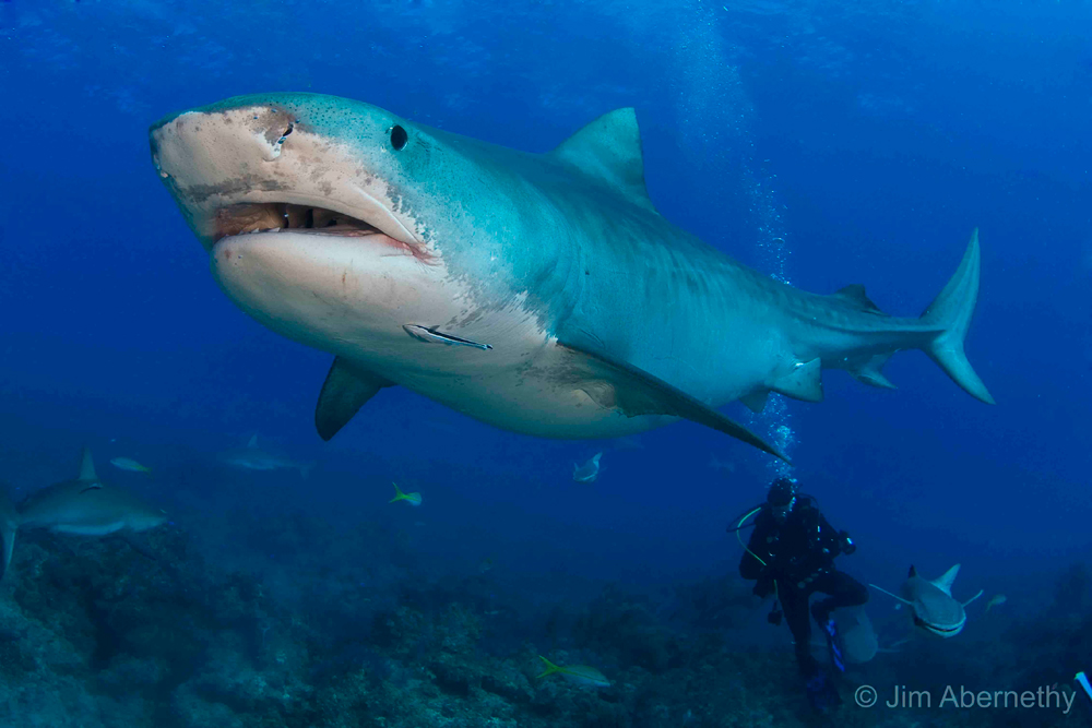 save our sharks sailors for the sea