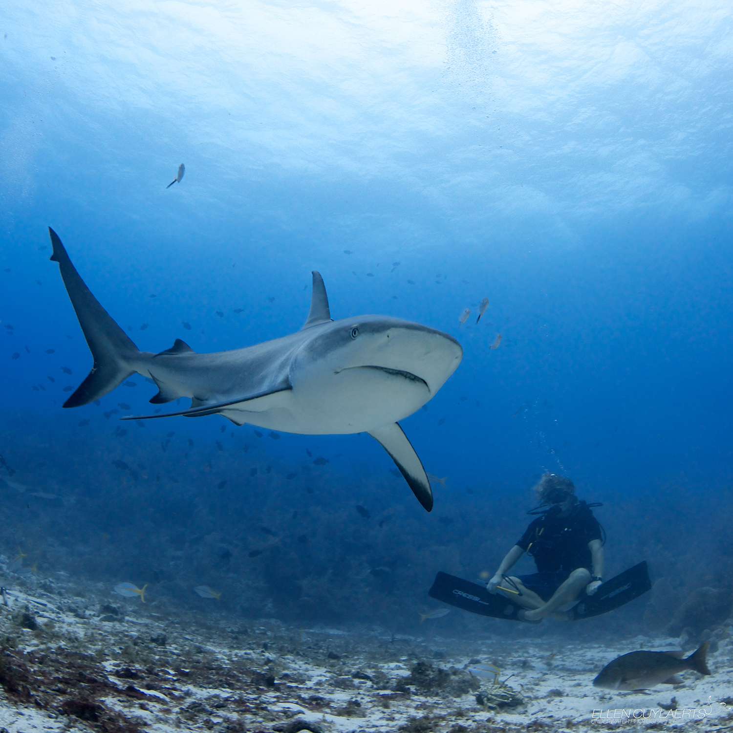 Sharks, kill, humans kill 73 million sharks per year for just their fins, shark diving, shark finning