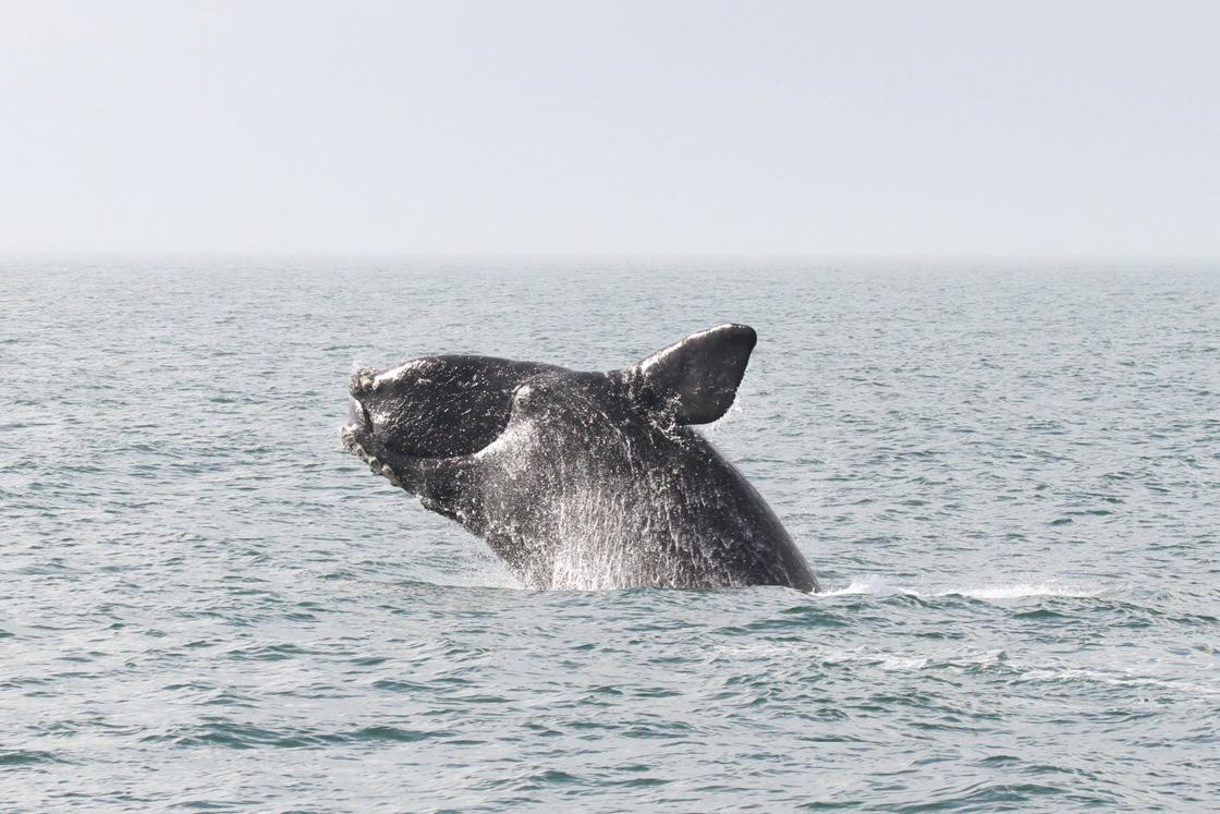 When Whales Meet Sails | Sailors for the Sea