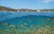 seagrass, fish, sailboat, boat