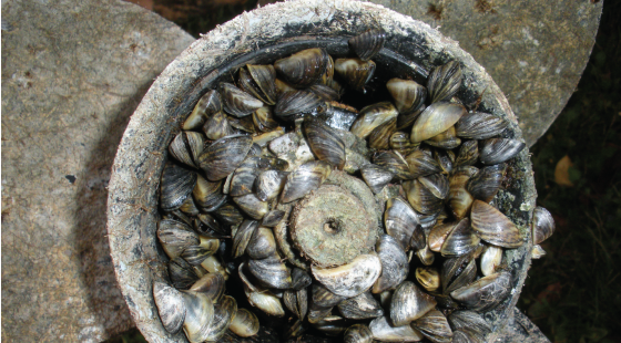 zebra mussels, invasive species, propeller