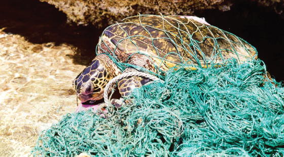 sea turtle, entanglement, fishing gear
