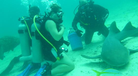 Nurse Shark, Friendly, shark, florida