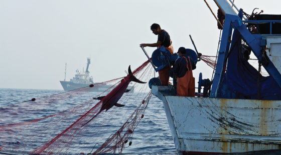 fishing, overfishing, fisheries