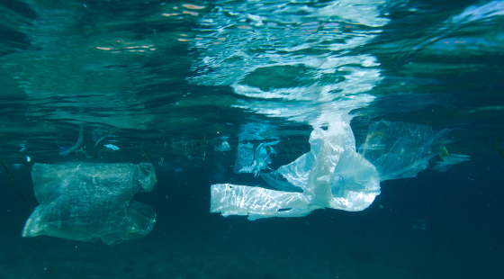 marine debris, plastic pollution, plastic bag, plastics