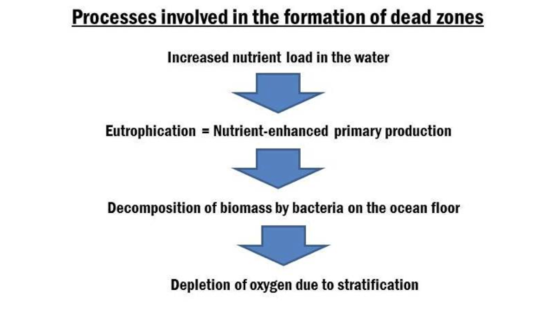 Formation of dead zones