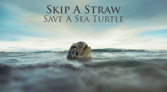 skip a straw, save a sea turtle