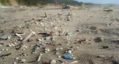 marine science, plastic pollution