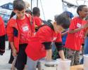 whale blubber, marine science