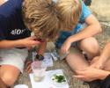 marine science, plankton