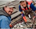 Commercial and sustainable salmon fishing in Bristol Bay