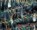 Shark Finning Prohibition Act, shark fins, what is shark finning, sharks