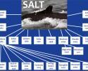 salt humpback whale family tree