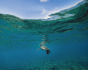 sea turtles, boating, save sea turtles