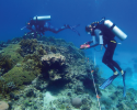 marine science, diving, coral reefs, conservation