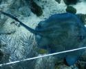 marine science, coral reefs, ray, stingray