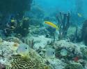 coral reefs, biodiversity, corals, marine science