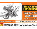 Report Lionfish