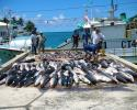 sharks, shark finning, Palau, global fishing watch, AIS, fishing, Taiwanese long-line vessel,