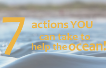 Seven actions you can take to help the ocean!