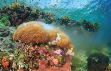 coral spawning, mass spawning
