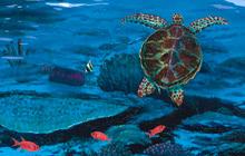 Healthy Oceans Coalition