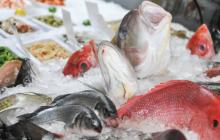 fish, fisheries, ocean