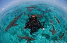 Sharks, Diving, Scuba Diver, Shark Circle