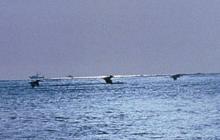 Blue Ocean Thumbnail